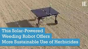 this solar powered weeding robot offers more sustainable use of herbicides