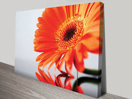 orange flower wall art  flower canvas prints