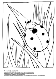 Coloriage Coccinelle Insectes Page 3