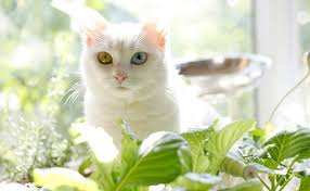 indoor cats and house plants a bad mix