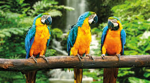 Image result for the rainforest