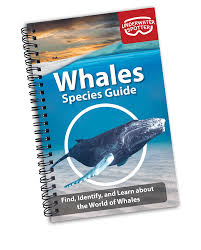 Whale Identification Guide Underwater Spotter