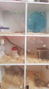 two female rats with 3 y ikea diy home 40