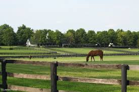 wooden farm fence. Wooden Fencing Farm Fence E