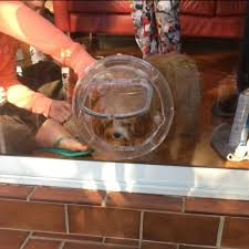small dog door for glass single double glazing