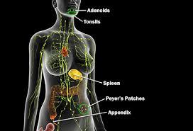 Image result for immune system images