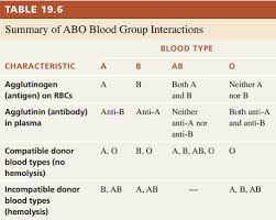 Bio121 Abo Blood Groups Flashcards Quizlet