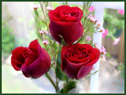 flower wall paper download beautiful roses wallpaper 20 images beautiful rose flower wallpaper