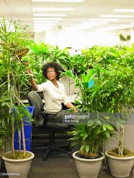 plants for office cubicle. female office worker tends to plants that surround by cubicle : stock photo for