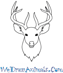 How To Draw A Deer Face