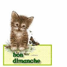 """Résultat de recherche d'images pour """"des chats bon dimanche"""""""