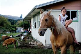 photographer of the year 2015 geographic photographer david white travelled to the urewera for a sunday star times photo essay on the