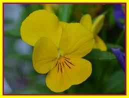 Blumen Bedeutung Sprache Gabryon Lichtblick Engel