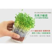 small office plant. Small Office Plant. Plant T A