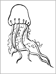 Small Picture Jellyfish Coloring Page Clipart Panda Free Clipart Images