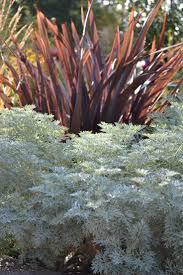 Artemisia Landscape Design Artemisia Powis Castle With Burgundy Phormium Vegetable