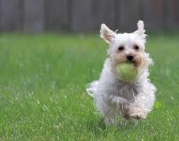 Les 10 commandements du chien heureux