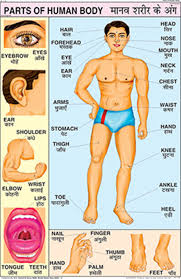 Human Body Parts Chart In English Buy Parts Of Human Body Chart 50x75cm Book Online At Low