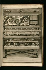 Cabinet Of Wonders 62 Best Images About Cabinet Of Curiosities On Pinterest Museums