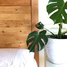 a wooden headboard with a plant beside it