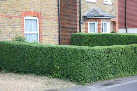 Image result for kid pushed into hedges
