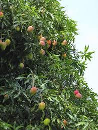Fruit Trees Sale Reviews  Online Shopping Fruit Trees Sale Non Gmo Fruit Trees For Sale