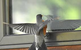 Canadian Wildlife Federation: Keep Birds from Hitting Windows