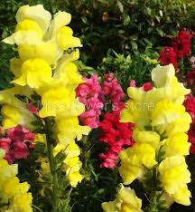 Popular Common Garden Flowers Buy Cheap Common Garden Flowers Lots