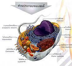เซลล์ของสิ่งมีชีวิต