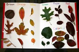 autumn and fall leaf art for kids and simple color graph activity
