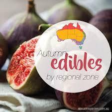 Vegetable Garden Seasonal Growing Guide Australia About