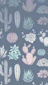 Кактусы кактус обои заставка wallpaper ...