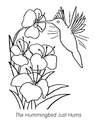 Small Picture Humming Bird Coloring Page Coloring Home