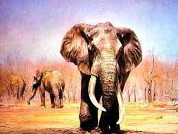 African elephant wallpapers HD ...