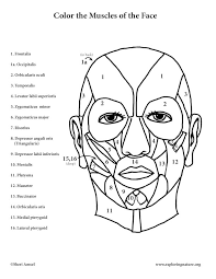 Neat Design Face Coloring Page Blank Faces Pages For Adults Free