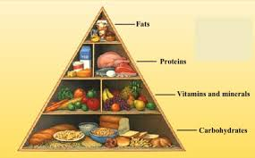 Protein Vitamins Minerals Fats And Carbohydrates Chart Components Of Food Class 6 Components Of Food