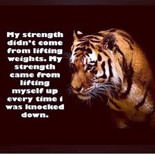Tiger Quotes 16 Inspiration Tiger Quotes Quotes Pinterest Tiger Quotes Tigers And Zodiac