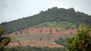 deforestation robin wyatt vision illegal deforestation sindhudurg 1 western ghats under threat ii open cast mining