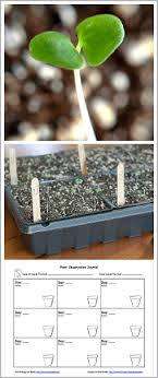 When To Sow Seeds Indoors Chart Gardening With Kids Planting Seeds With Free Printable