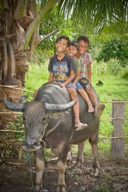 heifer international gifts the cow and the goat and the flock of