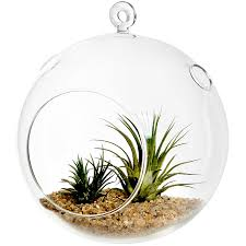 Air Plant Terrarium Amazoncom 7 Large Clear Glass Hanging Air Plant Terrarium Ball