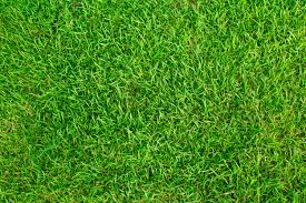 grass at night texture. Wonderful Texture Texture Grass Field Free Photo With Grass At Night