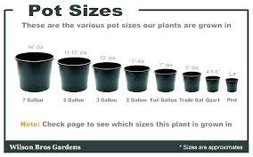 Nursery Container Sizes Chart Nursery Pots Wholesale Agengamatluxor Info