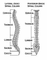 Scoliosis Degrees Of Curvature Chart Scoliosis In Adults What To Know About Symptoms Treatment