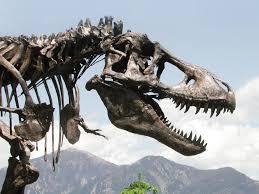 <b>My T</b>. <b>Rex</b> Is Bigger Than Yours