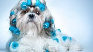 Resultado de imagem para cães fofos