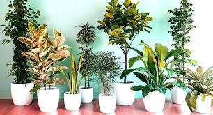 low light indoor plants safe for cats 5 best low light indoor plants low light indoor