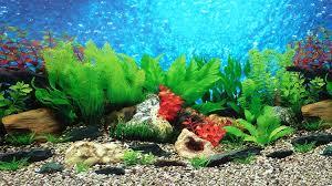 Best Fish Tank Background Capriartfilmfestival