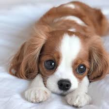 cute puppy dogs photo 43117550