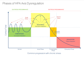 Hpa Axis Hpa Axis Dysregulation Phases Adrenal Stress Bella Lindemann